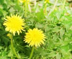 お庭の雑草手入れをサボっていると起こる4つの問題