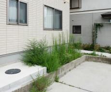 雑草を放置すると家や庭にも悪影響をおよぼします