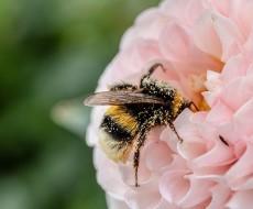 PM2.5や花粉は家づくりで防ぐことができます